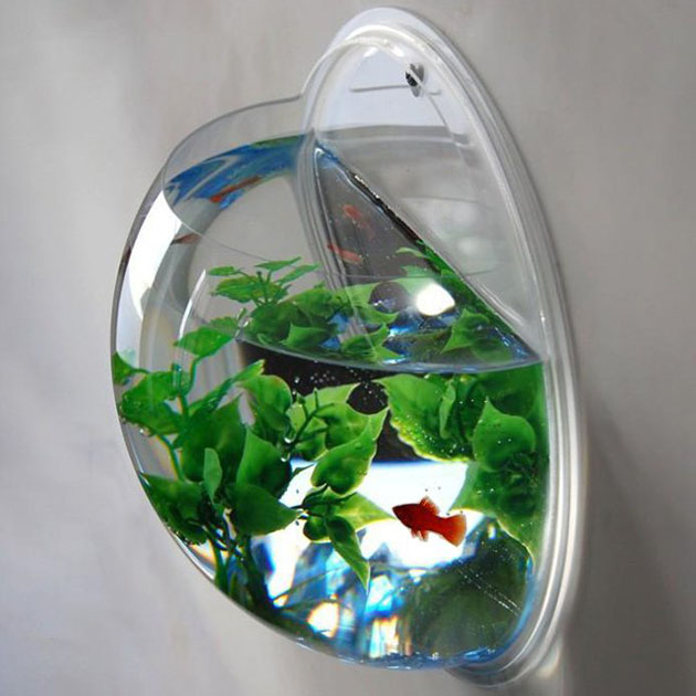 Wall mounted acrylic fish bowl petagadget for Acrylic fish bowl