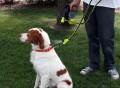 Cool Down Doggie Misting Leash