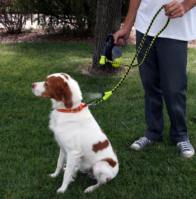 Cool Down Doggie Misting Leash