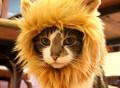Lion Hat for Pets