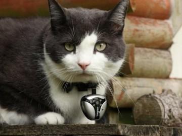 Eyenimal Cat Video Camera