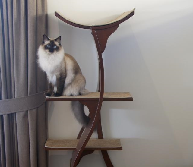 Feline Lotus Tower