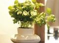 Single Herb Pot by Sagaform