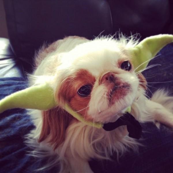 Yoda Dog Headband