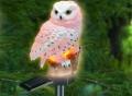 Solar Owl Light