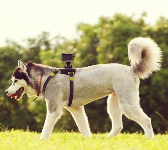 Action Cam Dog Mount