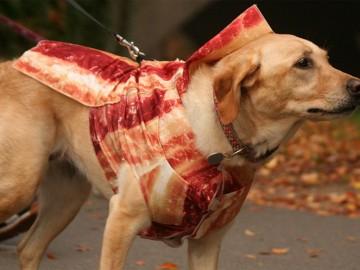 bacon-dog-costume-2
