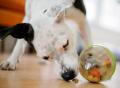 Wobble Ball Enrichment Dog Toy