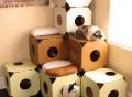 Modular Cat Condos