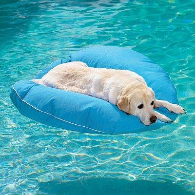Pet Pool & Deck Lounger