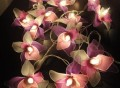 Orchid Fairy String Lights