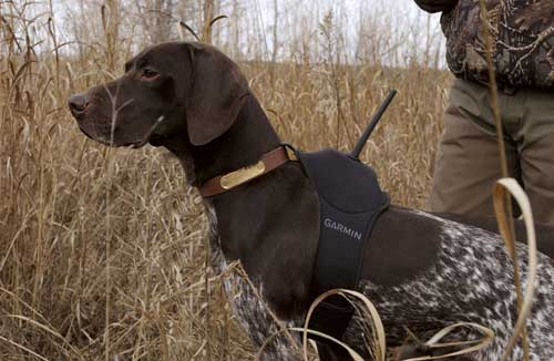 GPS Sporting Dog Tracker