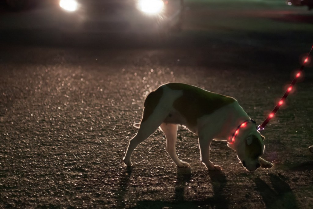 Lighted LED Dog Leash