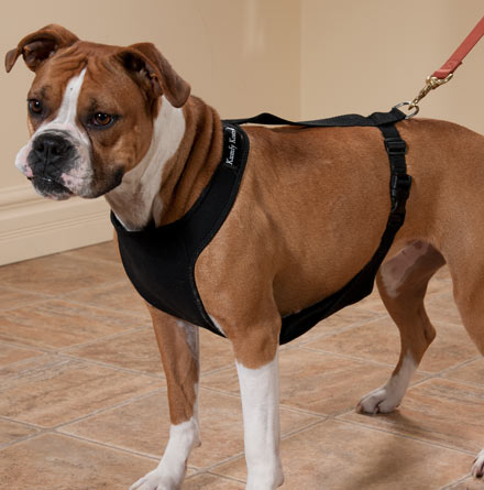 Warming/Cooling Dog Harness