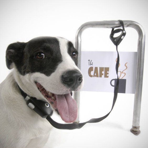 Safespot Locking Dog Leash by Paws
