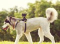 Sony Action Cam Dog Mount