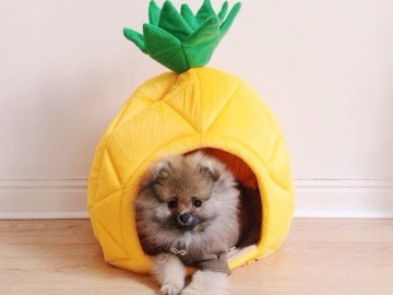 YML Pineapple Pet Bed