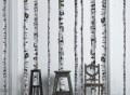 Birch Tree Decals