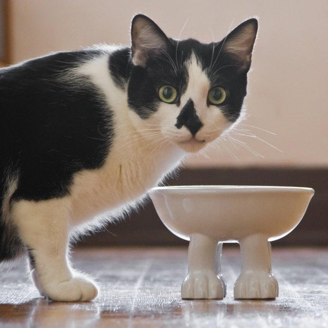 Cat Bowls by Dylan Kendall