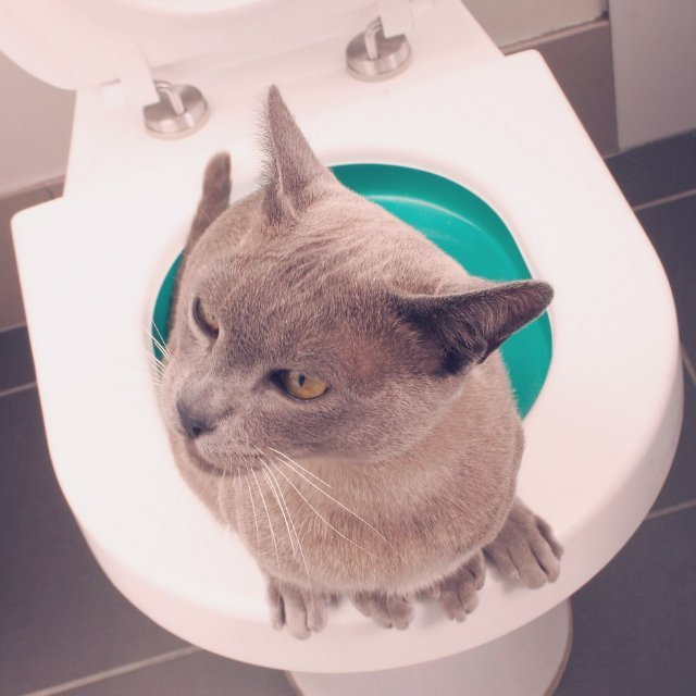 Litter Kwitter Cat Toilet Training
