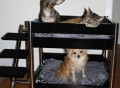 Metropolitan Pet Bunk Bed