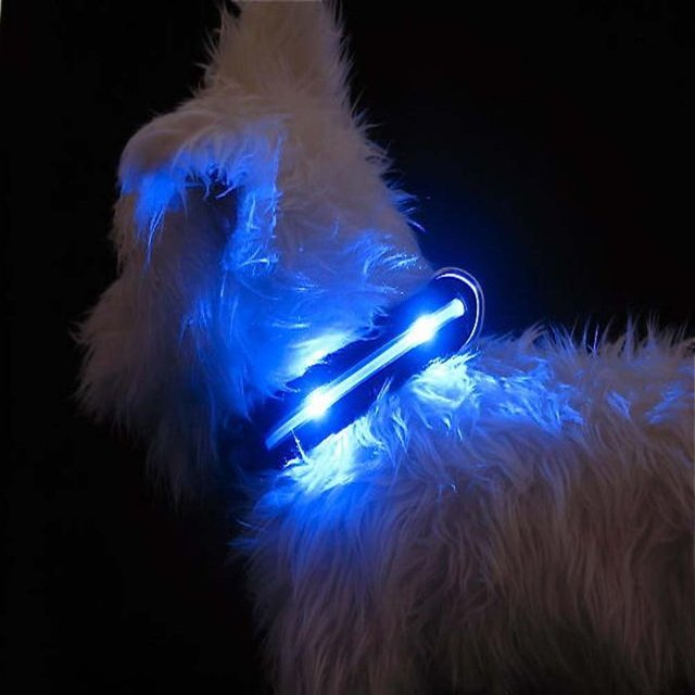 LED Lighted Dog Collars