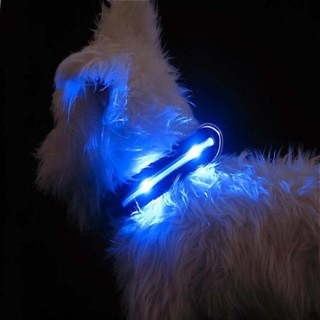 LED Lighted Dog Collars