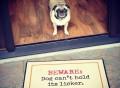 Beware: Dog Can't Hold Licker Doormat