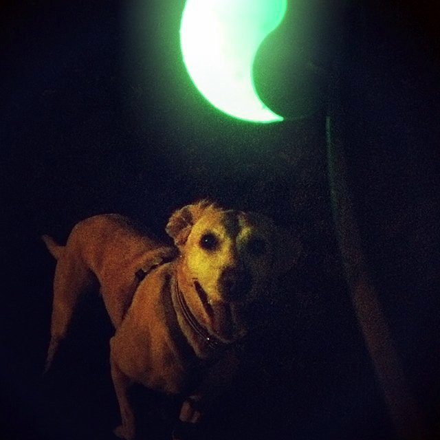 Meteorlight K-9 LED Ball