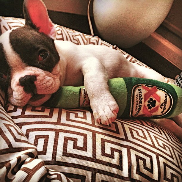 Dogs Equis Beer Toy