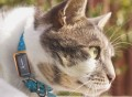 G-Paws Pet GPS Tracker