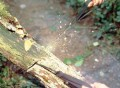 SaberCut Chain Saw