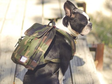 Survey Backpack by Herschel Supply Co USA