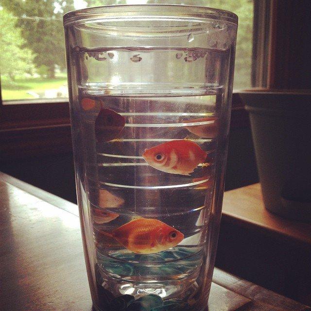 Goldfish Tumbler