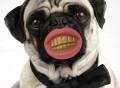 Pimp Dog Chew Toy