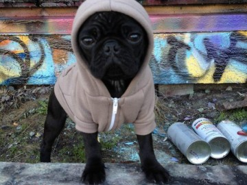 Flex Fleece Dog Zip Hoody