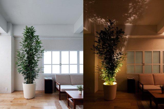 Forestarium Lamp