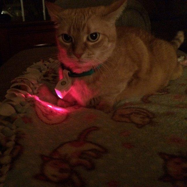 Laser Pet Collar