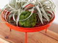 Orange Citrus Loft Mod Dish