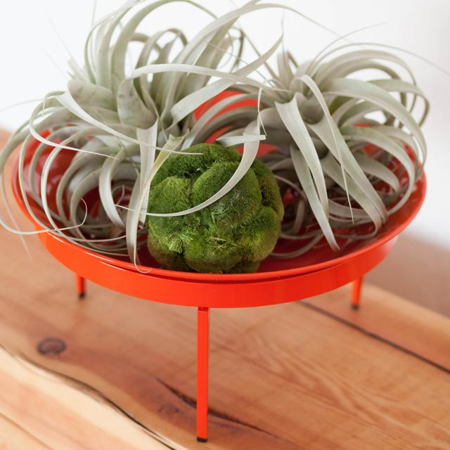 Orange Citrus Loft Mod Dish
