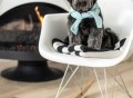 Rocker Shell Chair by Modernica