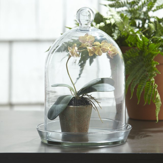 Glass Bell Jar Terrarium