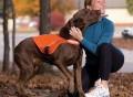 Kurgo Active LED Dog Vest