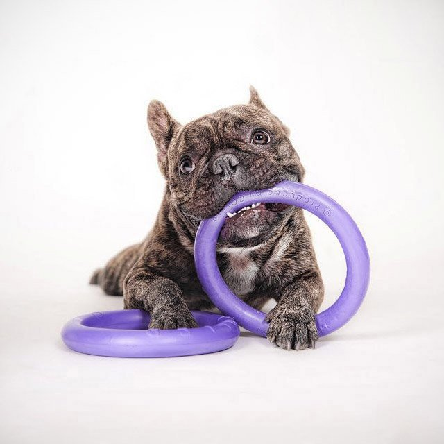 Puller Mini Interactive Dog Toy