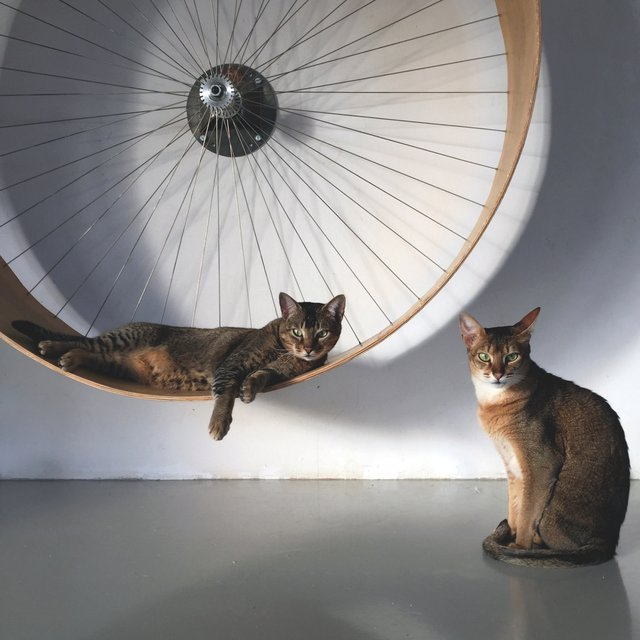 Cat Wall Wheel