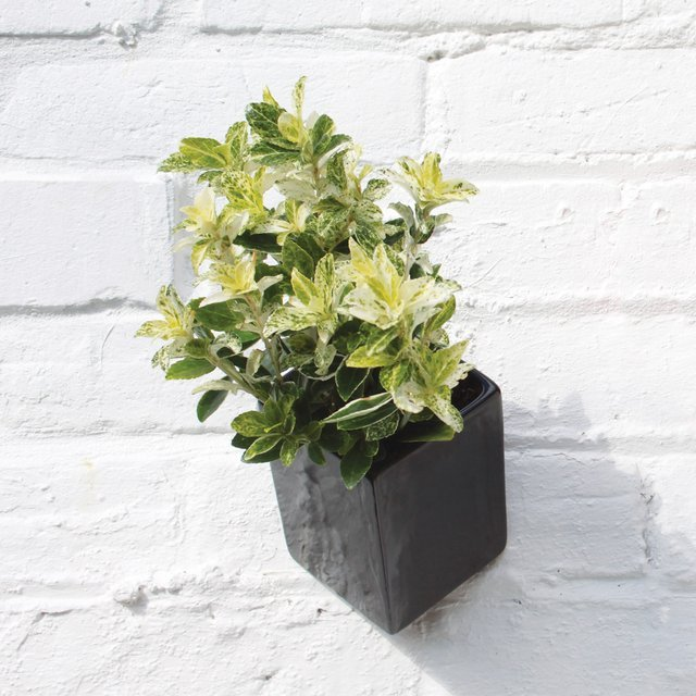 Large Off the Wall Planter