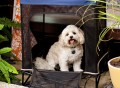 Quik Shade Pets Instant Yard Kennel