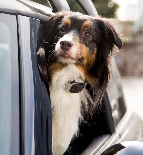 Tagg GPS Plus Pet Tracker