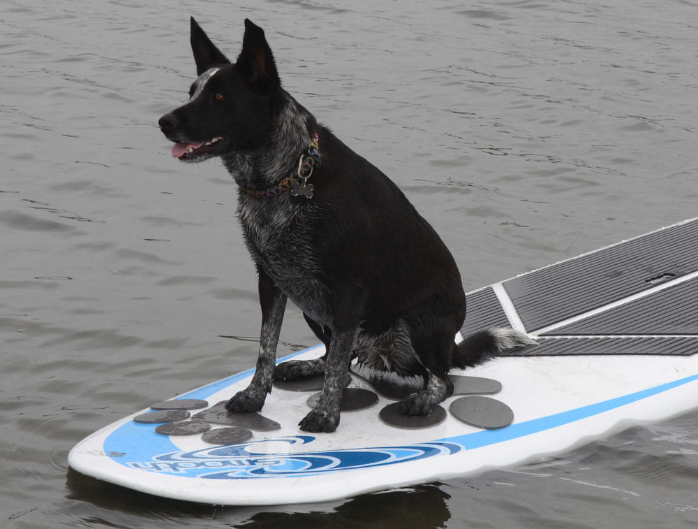 Pup Deck SUP Traction Pad