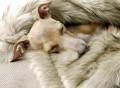 Faux Fur Dog Blanket